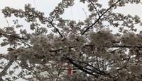 오늘의 운세(3월 29일 띠별 총운)-소띠 우도할계/양띠 오비이락/닭띠 어망홍리